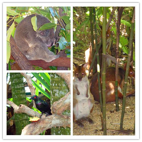 澳大利亚热带雨林动物